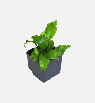 The Downpipe Vertical Garden Pots - Set of 6