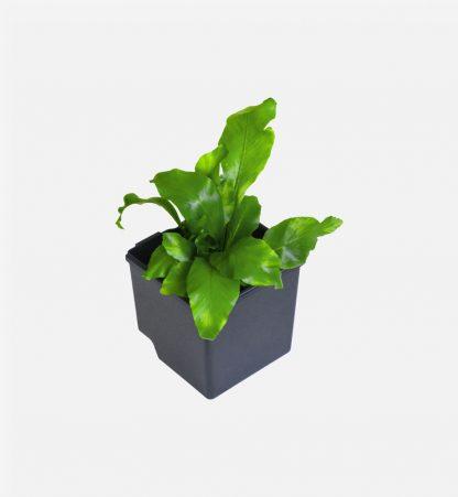 The Downpipe Vertical Garden Pots - Set of 6